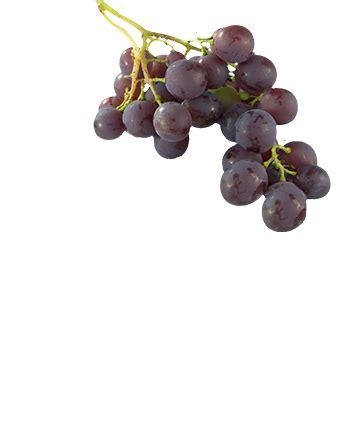 livraison de fruits au bureau livraison de corbeilles de fruits au bureau vergers de gally