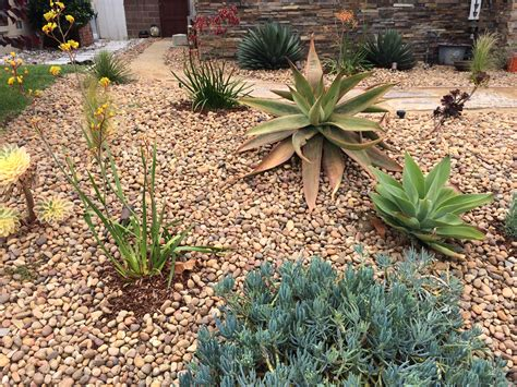 xeriscape plants may 2015 skechers the source