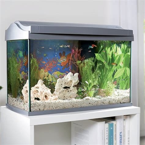 magasin meuble bureau aquarium maxi zoo