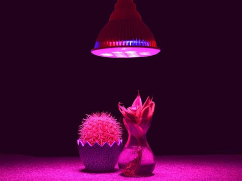 can you use a flood light to grow plants what are the main types of grow lights a simple guide