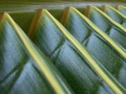 Zimmerpflanzen Auf Rechnung : palmen die exotischen zimmerpflanzen aus samen selber ziehen ~ Themetempest.com Abrechnung