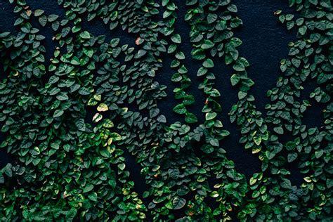 daun wallpaper dinding hd hijau layar lebar definisi