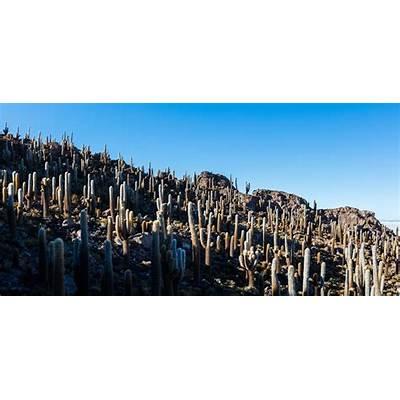 File:Isla del Pescado Salar de Uyuni Bolivia 2016-02-04
