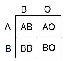 Punnett Square Practice Worksheet With Answers Blood Typing Problems Answer Key