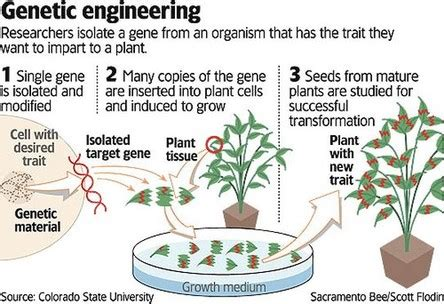Modification Analysis Definition by Scientific Principle 1 Genetic Engineering Genetic