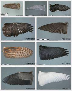 types  bird wings hummingbird tern puffin eagle