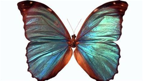levels  classification  butterflies animals momme