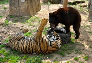 Noah's Ark Animal Sanctuary Lion Tiger Bear