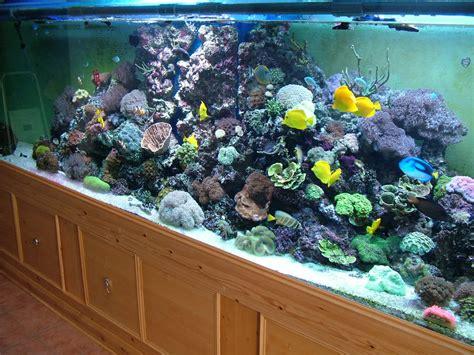 aquarium 500 liter 500 litre fish tank what you need to aquatics world