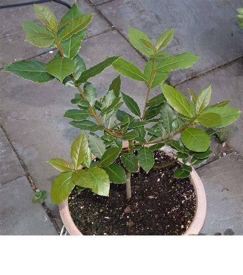 comment faire pousser des plantes aromatiques en int 233 rieur