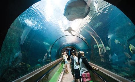 aquarium entry fee things to do in phuket thailand phuket aquarium thailand