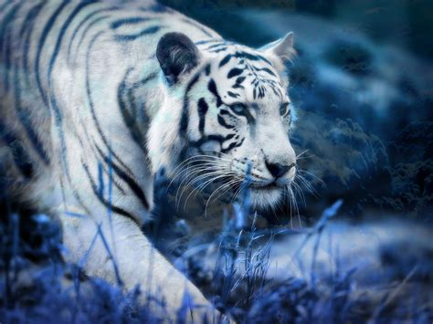 blue  white hd wallpaper  images