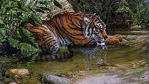 Animal En G : animales peligrosos encuentra todos los animales ~ Melissatoandfro.com Idées de Décoration