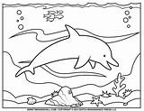 Dolphin Coloring Printable Ocean Clipart Outline Silhouette Templates Exercise Warm Learning Students Second Would Young sketch template