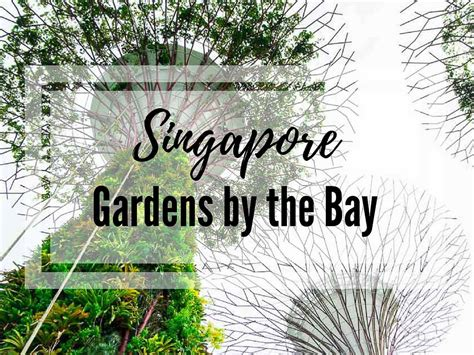 bay by the garden gardens by the bay in singapore discover the out of this world place in the garden city