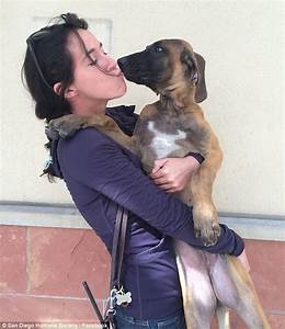 We need good home 29 dogs rescued horrific meat farm South Korea arrive California adoption