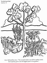 Mustard Seed Coloring Bible Pages Info Seeds Parable Faith Children Sunday Activities Google Colouring Printable Religious Education Tree sketch template