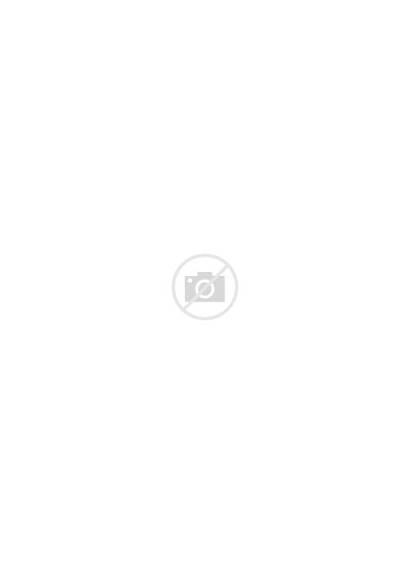 Forest Fog Birds Mystical Trees