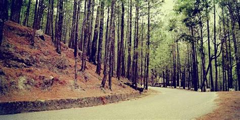 Chudail Baudi Shimla (History, Distance, Images & Location ...