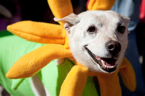 Coming Up Dog Events In Northern Virginia