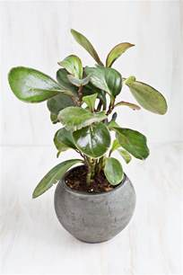 plants safe for cats 6 stylish houseplants that are safe for cats and dogs