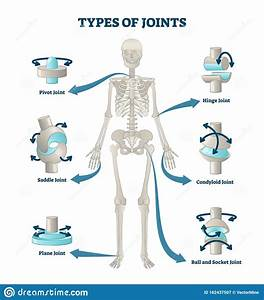 Types Of Joints Vector Illustration  Labeled Skeleton