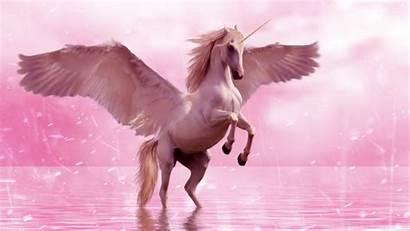 Unicorn Pegasus Horse Wings Fantasy Laptop Background