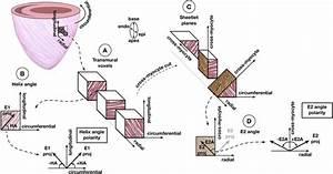 Diagram Of Helix