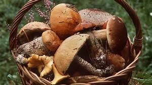 Pilze Auf Komposthaufen : pilzstellen pilze finden wo die suche lohnt themen ~ Lizthompson.info Haus und Dekorationen