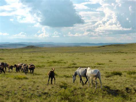 kazakhstan steppes horse horses asia central riding travel kalpak steppe heritage kyrgyzstan unesco map tour northern tours information mountain