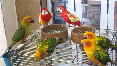 malaysia bird shop macau pet trading youtube