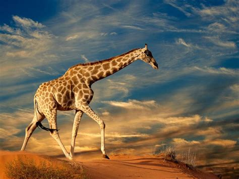 High Definition Animal Wallpapers - free animals wallpapers hd high definition