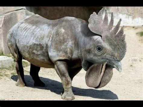 Most Amazing Hybrid Animals (full gallery) Funny Cute