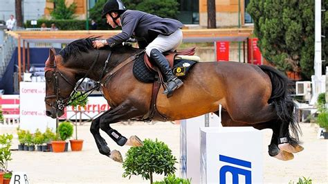 horse jumping breeds
