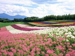 Flower Garden Backgrounds
