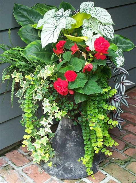 potted plants for shaded areas containers with pizazz not your ordinary container the garden diaries