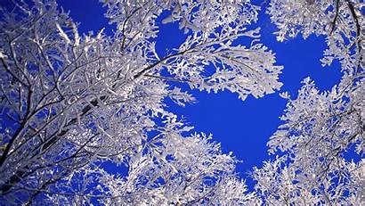 Snow Desktop Winter Frost Nature Landscapes Skies