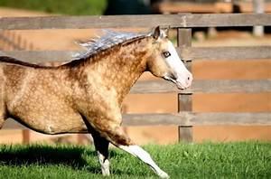 palomino quarter horse | Tumblr