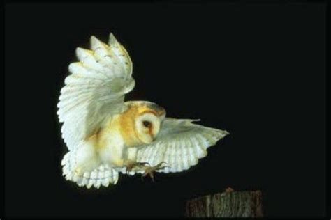 Do Barn Owls Eat Cats by Owl Appears To Go For Cat Sliding Glass Door Saves The Day