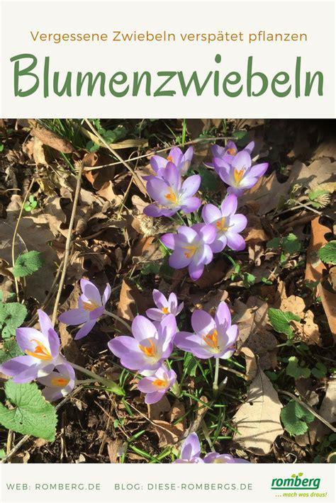 wann blumenzwiebeln pflanzen wann steckt blumenzwiebeln beautiful einpflanzen der herbst ist die richtige zeit das haus