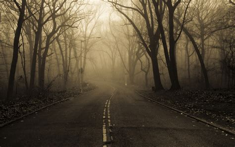 landscapes nature roads trees forest fog mist