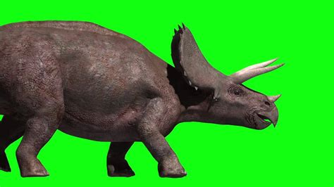 Jurassic Park Green Screen Triceratops Animation For