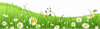 Grass Flowers Background Easter Yard Solutions Waving