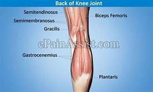 Knee Joint Tendonitis