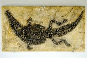 Prehistoric Crocodile - Fossil Canvas Prints and ...