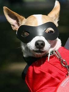 Halloween Costume Ideas for Dogs and Cats | DIY