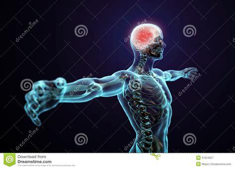 Central Nervous System Stock Illustration