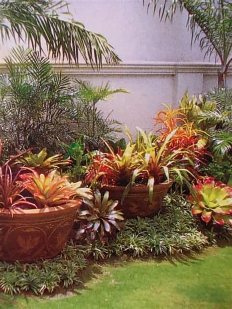 tropical plants landscaping ideas tropical garden using pots within landscape what a pretty bromeliads my dream backyard
