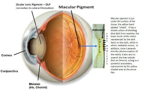 blue light macular degeneration blue blockers blue light blocking lens for better eye