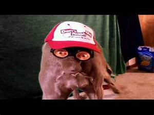 OLD STINKER WORLDS FUNNIEST DOG VIDEO - YouTube